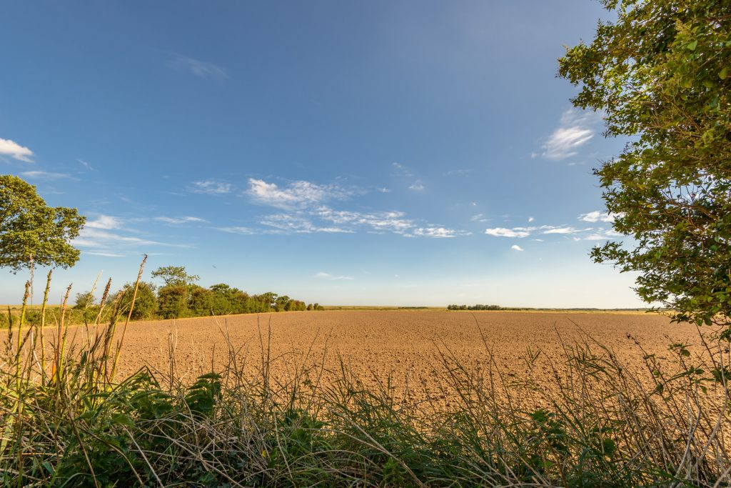 View across the fields at Crincle Cottage in Horsey