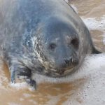 up-and-down-seal