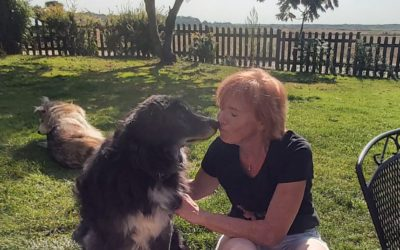Do You Doubt Our Love for Our Visiting Pooches? ….If so, do read on…..